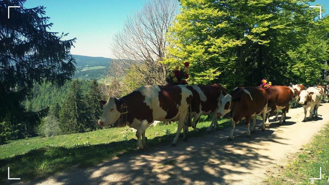 Switzerland - Jura - Dent du Vaulion - Inalpe